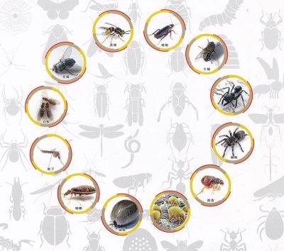 画像1: 虫よけUVカット冷感メンズラッシュガード